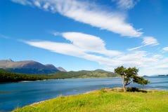Arbre formé par le vent dans le patagonia Photographie stock libre de droits