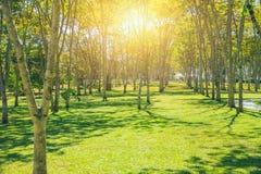Arbre frais extérieur de parc naturel de l'espace vert Images stock