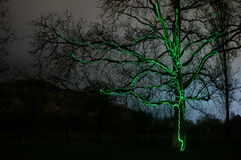 arbre frappé par lighning le boulon Photographie stock