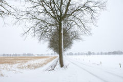 Arbre froid Image stock