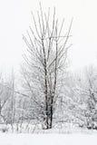 Arbre froid d'hiver avec l'horaire d'hiver de neige photographie stock