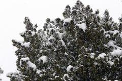 Arbre froid d'hiver avec l'horaire d'hiver de neige photo stock