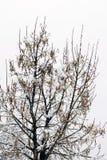 Arbre froid d'hiver avec l'horaire d'hiver de neige photos stock
