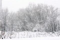Arbre froid d'hiver avec l'horaire d'hiver de neige images libres de droits