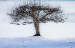 arbre fruitier congelé Image libre de droits