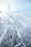 Arbre givré à l'hiver photos libres de droits