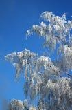 Arbre givré à l'hiver Images libres de droits
