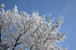 Arbre givré à l'hiver Image stock