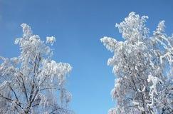 Arbre givré à l'hiver Image libre de droits