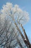Arbre givré à l'hiver photo libre de droits