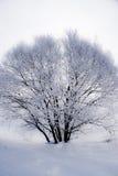 Arbre givré d'hiver Image stock