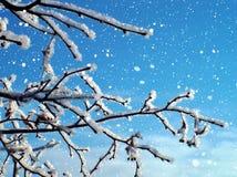 Arbre givré dans la neige Images libres de droits