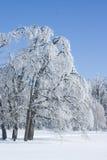 Arbre glacial Photographie stock libre de droits