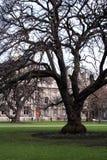 arbre grand photographie stock libre de droits