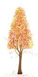 Arbre grand d'automne Images libres de droits
