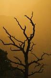 arbre grand de coucher du soleil de gorge Photos stock