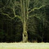 Arbre hanté dans le paradis de Bohème en hiver Images libres de droits