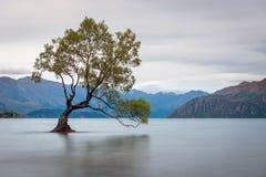 Arbre iconique dans Wanaka, Nouvelle-Zélande photos libres de droits