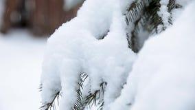 arbre impeccable ? feuilles persistantes de No?l avec la neige fra?che sur le blanc banque de vidéos