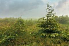Arbre impeccable sur un pr? en brouillard photos libres de droits