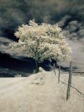 Arbre infrarouge Photo stock