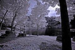 Arbre infrarouge de photo, roche, fille Photographie stock libre de droits