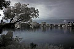 Arbre infrarouge, horizontaux et lac d'â de photo Image libre de droits