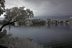 Arbre infrarouge, horizontaux et lac d'â de photo Photo stock