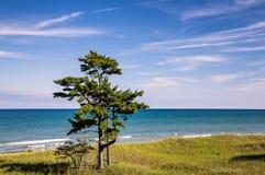 Arbre isolé à la plage Photos libres de droits