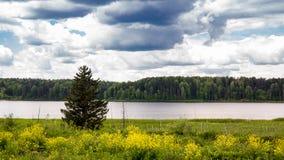 Arbre isolé à un étang un jour d'été Images stock