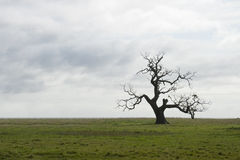 Arbre isolé Photo libre de droits