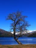 arbre isolé Photo stock