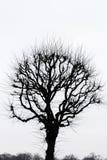 arbre isolé Photos libres de droits