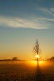 Arbre isolé attrapant le soleil Photographie stock libre de droits