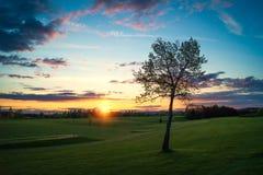 Arbre isolé au coucher du soleil photo stock