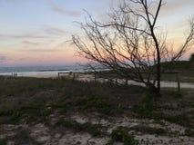 Arbre isolé au coucher du soleil photographie stock