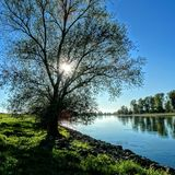 Arbre isolé au rivage de Danube images stock