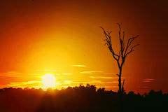 Arbre isolé avec le fond de coucher du soleil Image stock