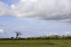 Arbre isolé chez Saswad d'état de maharashtra d'Inde image libre de droits