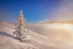 Arbre isolé congelé pendant le matin en montagne de Tatra Photographie stock