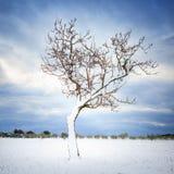 Arbre isolé couvert par la neige en hiver. La Toscane, Italie image stock