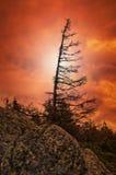 arbre isolé dans l'incendie du ciel de coucher du soleil Photographie stock libre de droits
