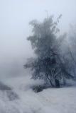 Arbre isolé dans la neige Photos libres de droits