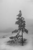 Arbre isolé dans la neige Image libre de droits