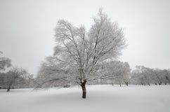 Arbre isolé dans la neige Image stock