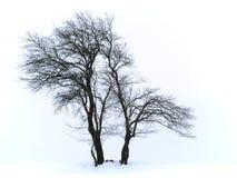 Arbre isolé dans la neige Photos stock