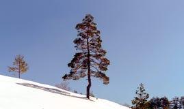 Arbre isolé dans la neige Photographie stock libre de droits