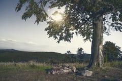 Arbre isolé dans le coucher du soleil Photos stock
