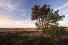 Arbre isolé dans le coucher du soleil Image stock