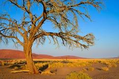 Arbre isolé dans le désert photographie stock